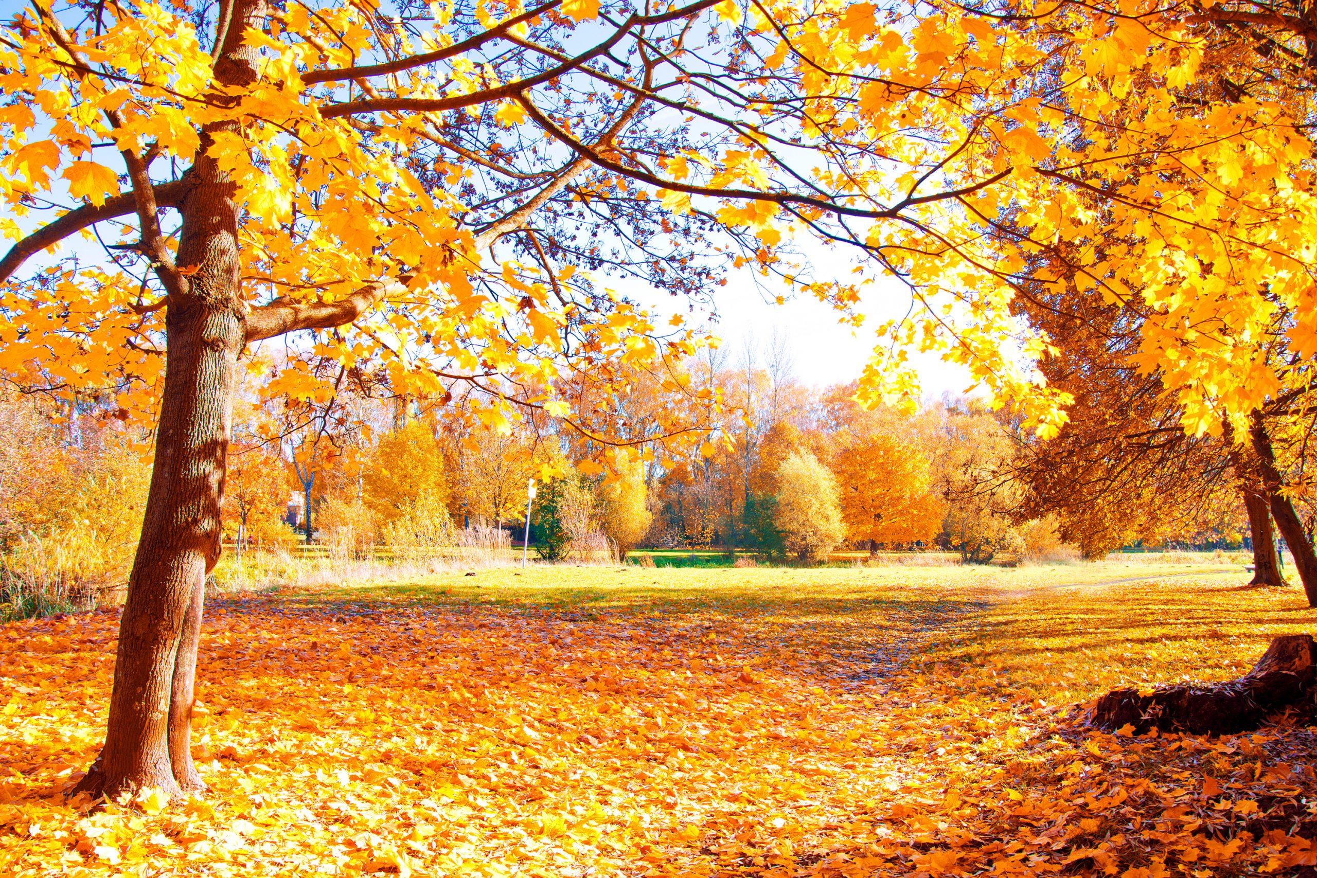 Confira 6 dicas para viajar no outono!