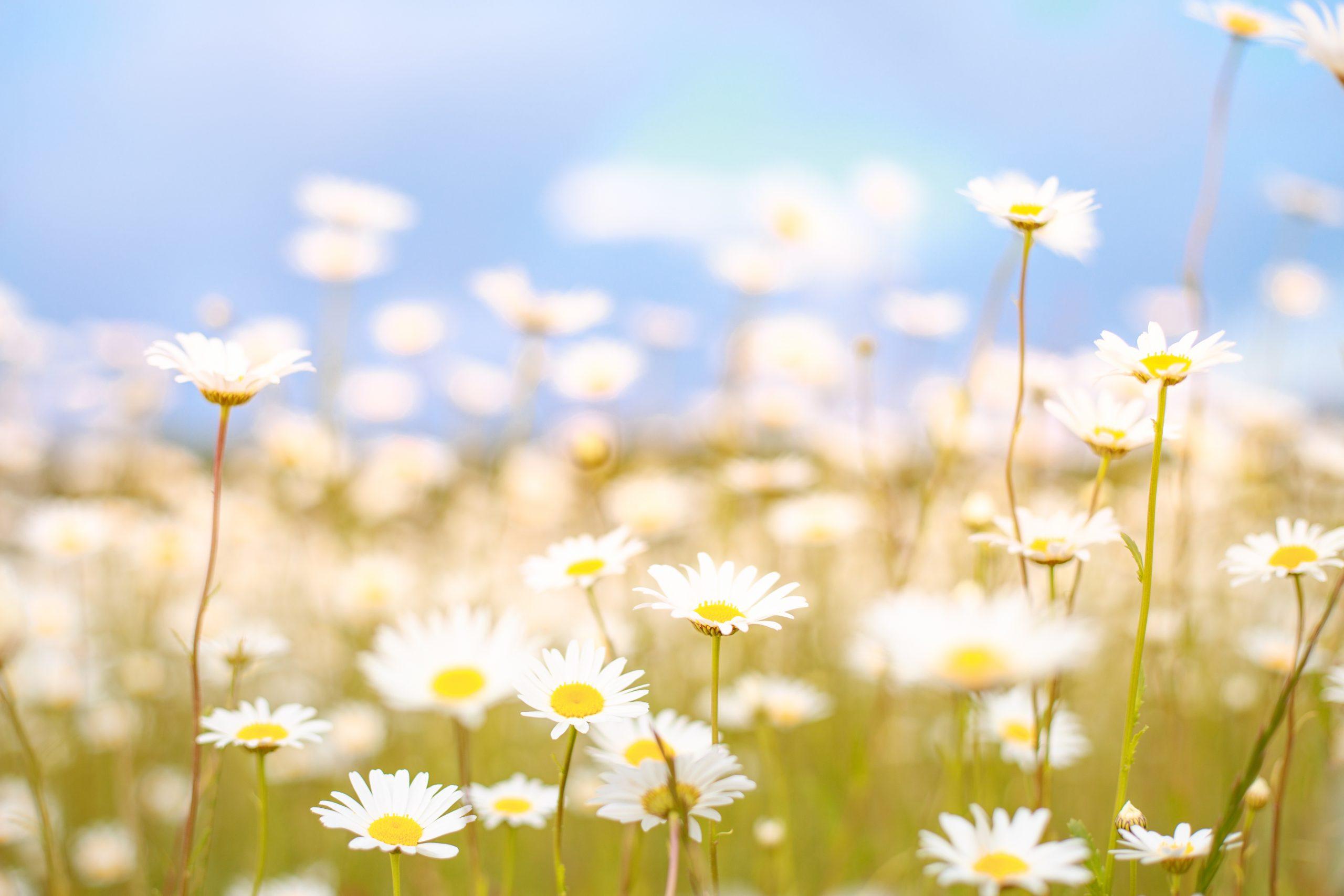Veja 6 dicas para viajar na primavera!
